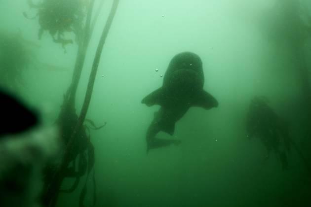 Hai im trüben Wasser - Weitblick-Er-klärung